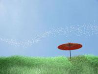 草原の丘に立つ傘と桜吹雪