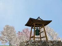 寺の鐘と桜
