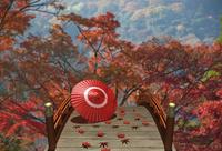 秋の太鼓橋