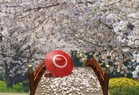 春の太鼓橋