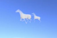 親子の馬の形をした白雲