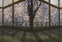 春の和風建物の渡り廊下