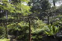 シンガポール・ボタニック・ガーデン
