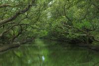 四草生態文化園区