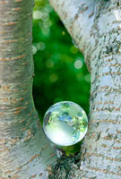 林の中の地球儀
