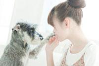 室内でミニチュアシュナウザーと遊ぶ若い日本人女性 10367000229| 写真素材・ストックフォト・画像・イラスト素材|アマナイメージズ