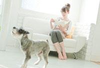 室内でミニチュアシュナウザーと過ごす若い日本人女性