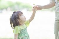 母親にタンポポの花を差し出す女の子