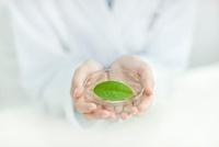 葉っぱを持つ日本人女性研究者 10367002968| 写真素材・ストックフォト・画像・イラスト素材|アマナイメージズ