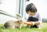 ウサギに人参を与える女の子