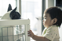 赤ちゃんとフレンチブルドッグ
