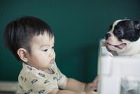 赤ちゃんとフレンチブルドッグ 10367006854| 写真素材・ストックフォト・画像・イラスト素材|アマナイメージズ