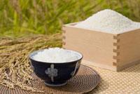 升に入ったお米と稲穂とお茶碗