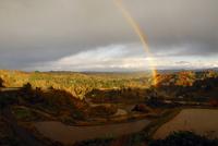 秋の棚田と虹