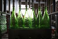 ボトルにお酒を入れる 10373017260| 写真素材・ストックフォト・画像・イラスト素材|アマナイメージズ