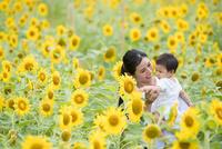 ひまわり畑で微笑む20代母と赤ちゃん 10373019251  写真素材・ストックフォト・画像・イラスト素材 アマナイメージズ