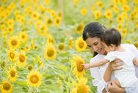 ひまわり畑で微笑む20代母と赤ちゃん 10373019294  写真素材・ストックフォト・画像・イラスト素材 アマナイメージズ