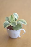 カップに入った観葉植物