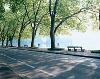 道路沿いの並木とベンチ