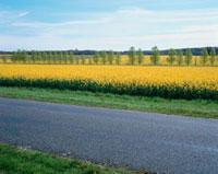 一面の花畑と道路