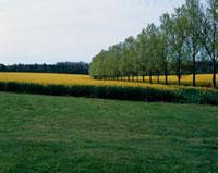 花畑と草原