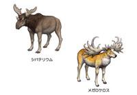 第四紀 アジアの生き物生き物