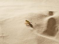 砂の上のイメージ