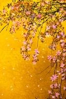 枝垂れ桜(フォトイラスト)