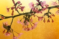 桜と金屏風(フォトイラスト)