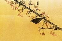 河津桜とメジロ(フォトイラスト)