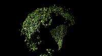 葉っぱの地球儀