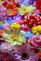 カラフルな花の敷き詰め 10405000082| 写真素材・ストックフォト・画像・イラスト素材|アマナイメージズ