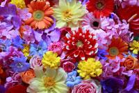 カラフルな花の敷き詰め