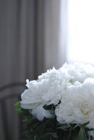 芍薬のアレンジメント 10405000735| 写真素材・ストックフォト・画像・イラスト素材|アマナイメージズ