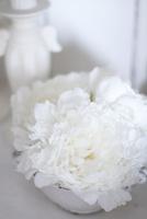 陶器の器にいけた真っ白な芍薬 10405000740| 写真素材・ストックフォト・画像・イラスト素材|アマナイメージズ