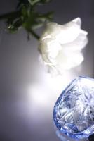 白いフレッシュアネモネとブルーの香水ビンに当たる光 10405000770| 写真素材・ストックフォト・画像・イラスト素材|アマナイメージズ