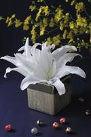 金の器に活けた白い百合と和柄の玉と黄色のオンシジューム(生花) 10405000899| 写真素材・ストックフォト・画像・イラスト素材|アマナイメージズ