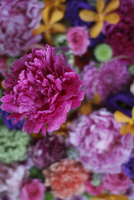 いろいろな花の敷き詰め 10405000961| 写真素材・ストックフォト・画像・イラスト素材|アマナイメージズ