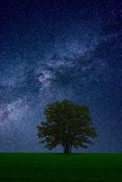星空と木 10410001058| 写真素材・ストックフォト・画像・イラスト素材|アマナイメージズ