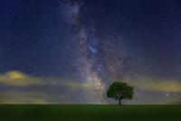 星空と草原の木 10410001067| 写真素材・ストックフォト・画像・イラスト素材|アマナイメージズ