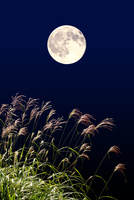 ススキの穂と満月