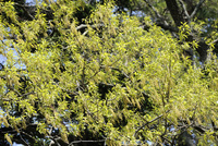 クヌギ 10414000714| 写真素材・ストックフォト・画像・イラスト素材|アマナイメージズ