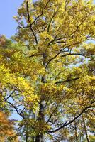 クヌギ 10414001390| 写真素材・ストックフォト・画像・イラスト素材|アマナイメージズ