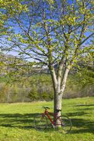 赤い自転車と戸隠高原鏡池の湖畔の野原の木