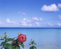 ハイビスカスと海と雲