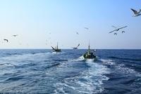 出漁する漁船とカモメ