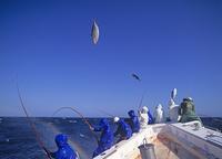 カツオ一本釣り漁