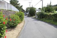 式根島村内に咲くハイビスカス 10430008914| 写真素材・ストックフォト・画像・イラスト素材|アマナイメージズ