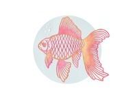 金魚 10448000012| 写真素材・ストックフォト・画像・イラスト素材|アマナイメージズ