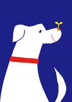 犬 10460000077  写真素材・ストックフォト・画像・イラスト素材 アマナイメージズ